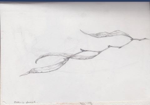 whale 3 1